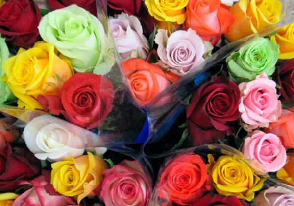 Alani Gardens - Colours of Love ©