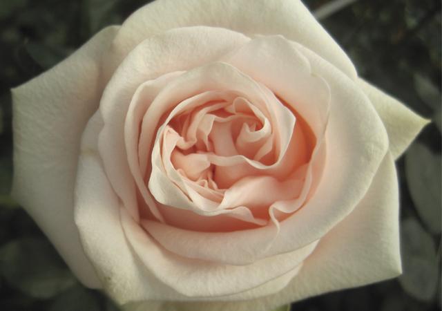 Alani Gardens - Pink Wedding ©
