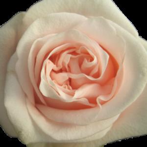 Alani Gardens - Pink Wedding